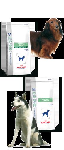 Dental dieet hond