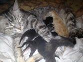 Geboorte bij de kat