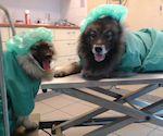 castratie-hond