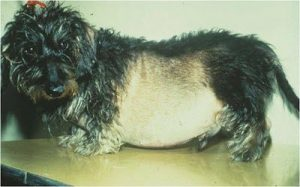 cushing sundroom hond