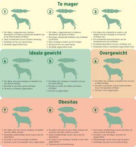 lichaamsconditiescore hond