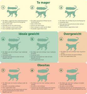 lichaamsconditiescore kat