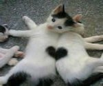 Hartproblemen bij de kat