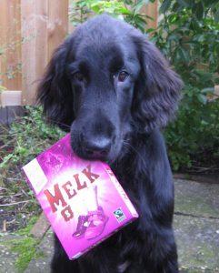 hond met chocolade latter