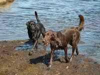 Honden links