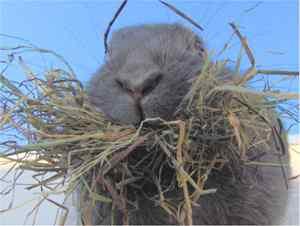 konijn met hooi