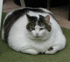 obesitas kat