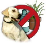 gifstoffen en huisdieren