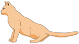 kat in plashouding