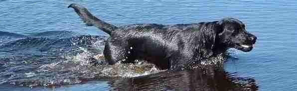 In water spelende hond