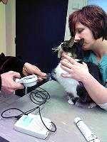 bloeddrukmeting kat