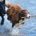 honden_spelend_in_water