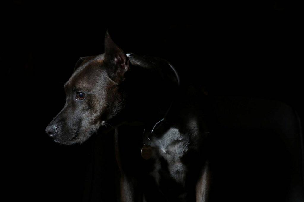 zwarte_hond-zwarte_achtergrond